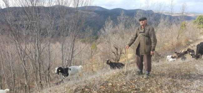 Akdağ Yaylası Kış Ortasında Bahar Yaşıyor