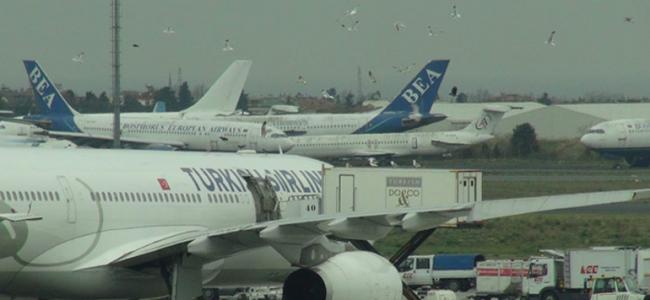 Atatürk Havalimanı'nda Kuşlardan İlginç Görüntü