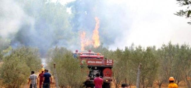 Antalya'da ki yangın sonunda kontrol altına alındı