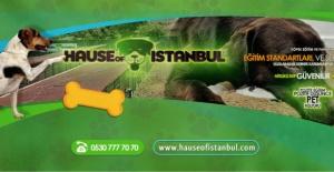 Köpek Pansiyonu Ataşehir