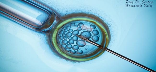 Tüp Bebek Tedavisinde Blastosist Embriyo