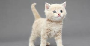 Kaybolan Kedi Nasıl Bulunur?