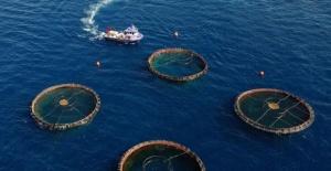Türkiye Su Ürünleri İhracatından 8 Ayda 632 Milyon Dolar Kazandı